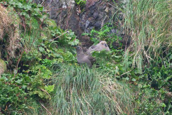 2011-04-11-sooty-albatross-007918444E0-8A9D-3892-FD75-3E79EBB83756.jpg